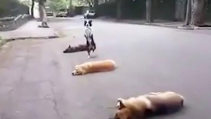 Hond doet bijzonder trucje