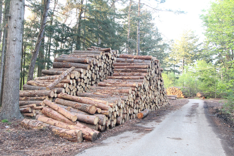 Houtopslag na bomenkap bij Wapenveld