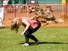 Niets moet, alles kan bij Dog Dance in Valkenswaard