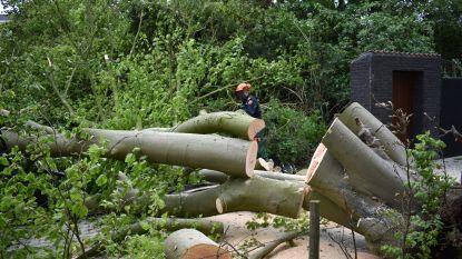 Storm op komst: gemeentes in Antwerpse rand nemen maatregelen