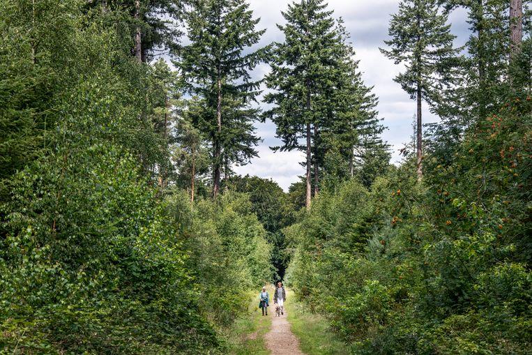 Wandelaars in het Borrebos, dat voor een deel gekapt moet worden voor high-end-appartementen.   Beeld Raymond Rutting / de Volkskrant