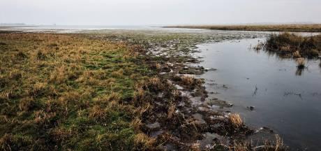 1400 hennepplanten aangetroffen in natuurgebied op rand van Zeeland