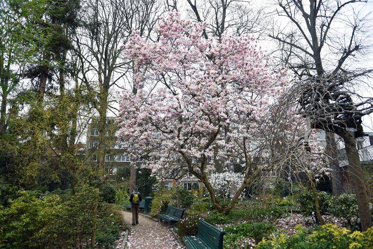 De Kruidtuin in Leuven staat in bloei. De perfecte plek om even te ontsnappen aan de coronacrisis.