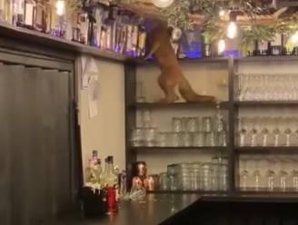 Beestige bezoeker kiepert glazen en flessen tegen de grond in restaurant tv-kok Jeroen De Pauw