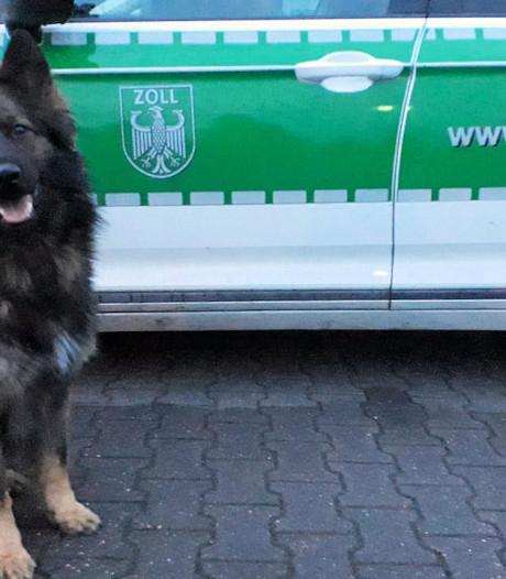 Duitse drugshond Merlin vindt 300 gram heroïne in autobumper bij grens Enschede