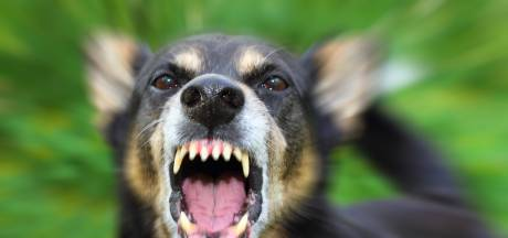 Vlam in pan, ruiten ingegooid en angst op Colmschate na doodbijten hondje; cameratoezicht herstelt rust