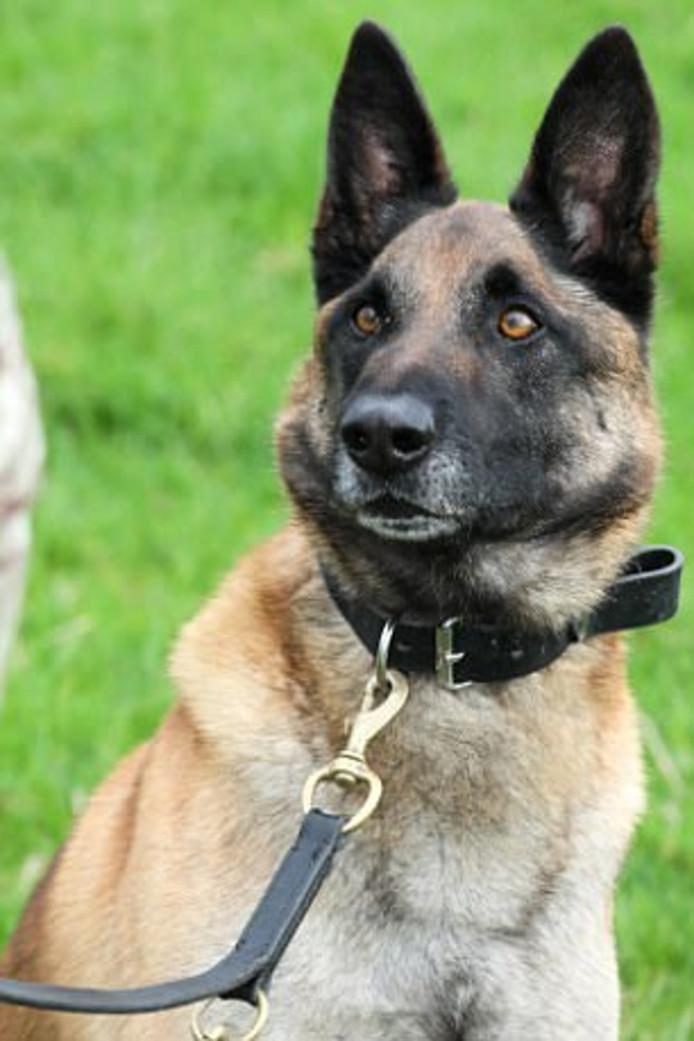 Mali is een legerhond die dankzij zijn moed bijdroeg aan een succesvolle aanval op de Taliban in Afghanistan.