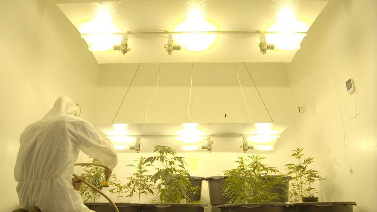 De professionele plantage bevat vooral planten voor kankerpatiënten.