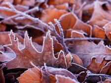 27 januari: Winterwandeling door bossen Clinge en Sint Jansteen