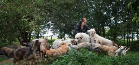Daniëlle uit Loerbeek moet 20 van haar 35 honden weg doen: 'Over mijn lijk!'