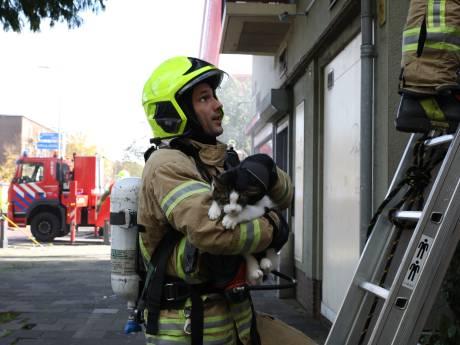 Kat en hond gered bij brand in Schiedam