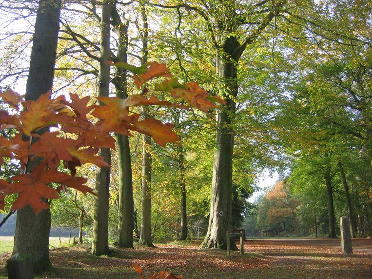 Het stadsbestuur vraagt parken en bossen, zoals Tillegem, te vermijden.