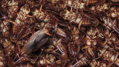 Kakkerlakkenplaag ziekenhuis blijkt sabotage van boze verpleegkundigen