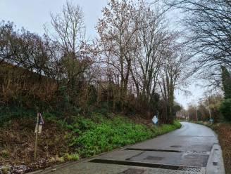 Hazelaarweg in Velm tijdelijk afgesloten vanaf maandag door kaphoutonderhoud