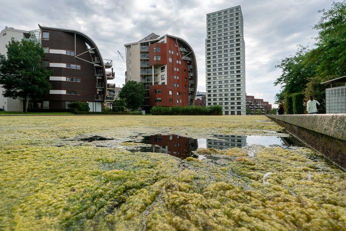 Nederland,  Den Bosch, groene Drab in de hofvijver van het paleiskwartier