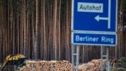 Milieuactivisten kondigen protest aan tegen bomenkap voor Tesla-fabriek in Berlijn