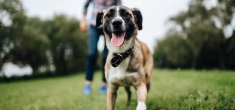 Rouwverlof als je huisdier overlijdt? In Australië kan het straks