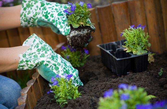 Als Rotterdammers hun tuinen en terreinen zouden vergroenen, dan loopt het hemelwater beter weg en worden riolen minder snel overbelast.