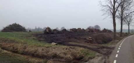Beltrumse broers Te Bogt moeten gekapte bomen terugzetten