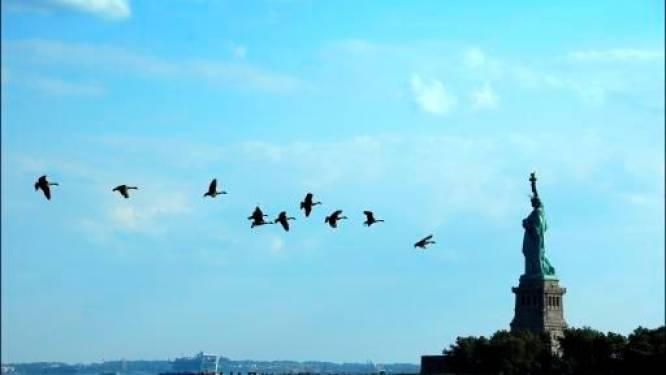 New York ruimt 175.000 ganzen voor luchtverkeer