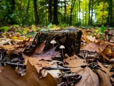 Utrechts Landschap zoekt hulp bij aankoop nieuwe natuur