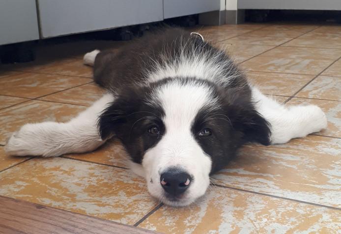 Honden (en katten) liggen nu graag in de keuken of badkamer, op koude stenen.