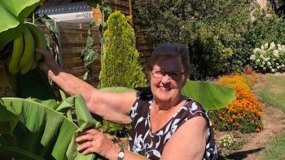 Eerste bananenpluk in België blijkt grapje van Genendijkenaar