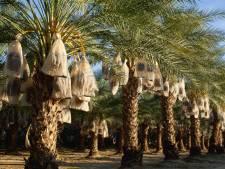 Des scientifiques font pousser un arbre grâce à des graines vieilles de 2.000 ans