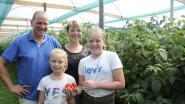 Caroline en Filip starten als eerste in de regio met frambozenteelt: liefhebbers kunnen terecht op de zelfplukdagen
