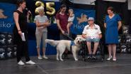 Nieuwe thuis voor 15 assistentiehonden op 25ste verjaardagsfeestje van Hachiko