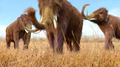 Cellen van bevroren mammoet na 28.000 jaar gereactiveerd, herrijzenis zit er echter niet in