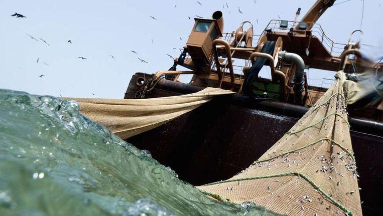 Een diepvriestrawler in bedrijf in de wateren voor de kust van West-Afrika. ©Greenpeace Beeld