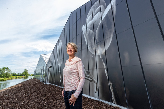 Erma Rotteveel toont de foto's op de tulpenkassen.