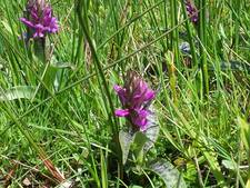 Wandeling langs kwetsbare orchideeën