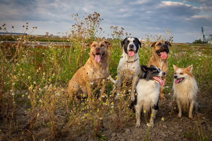 Honden in de Afferdense en Deestse waarden.