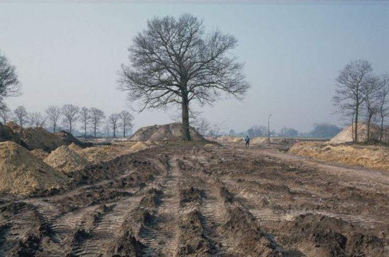 De boom ten tijde van de aanleg van de A58 in de jaren tachtig. Beeld Henk Rijken,Stadsarchief Breda