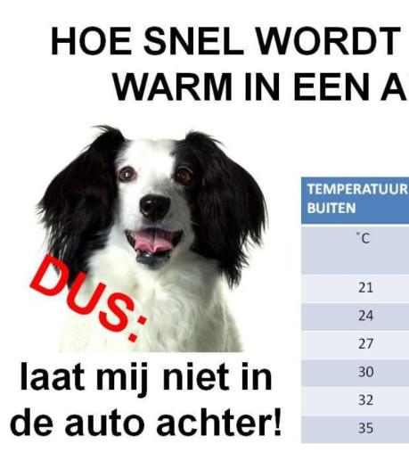 Dierenpolitie waarschuwt nog eens: laat je hond niet in de auto achter