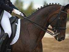 Russische paardendames vechten over ruin Limcatus