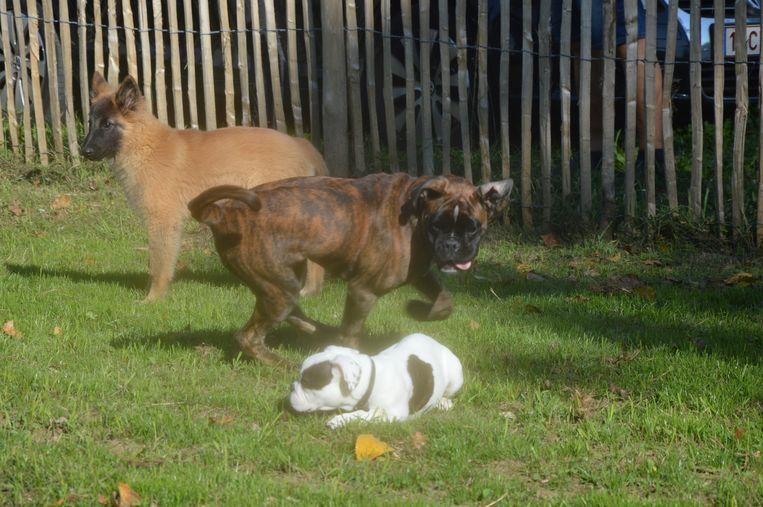 De honden mogen vrij rondlopen op de hondenlosloopweide in Welle.