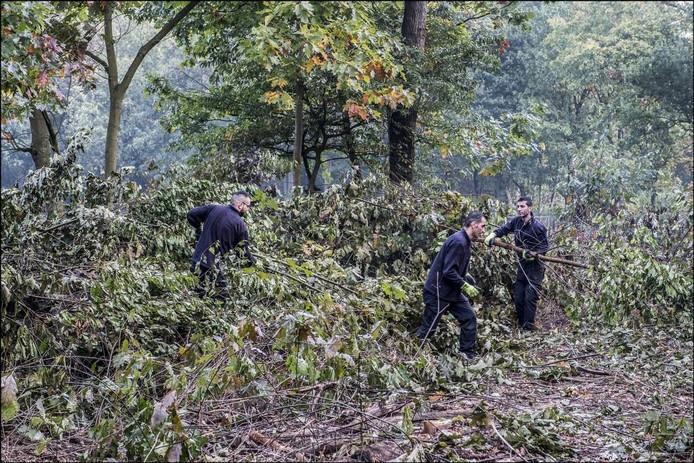 Statushouders aan het werk in het Heijense bos. Foto Theo Peeters
