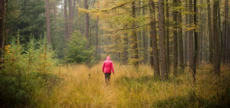 Naaldbomen op Veluwe vervangen door loofbomen: Gelderland trekt 7,5 miljoen uit