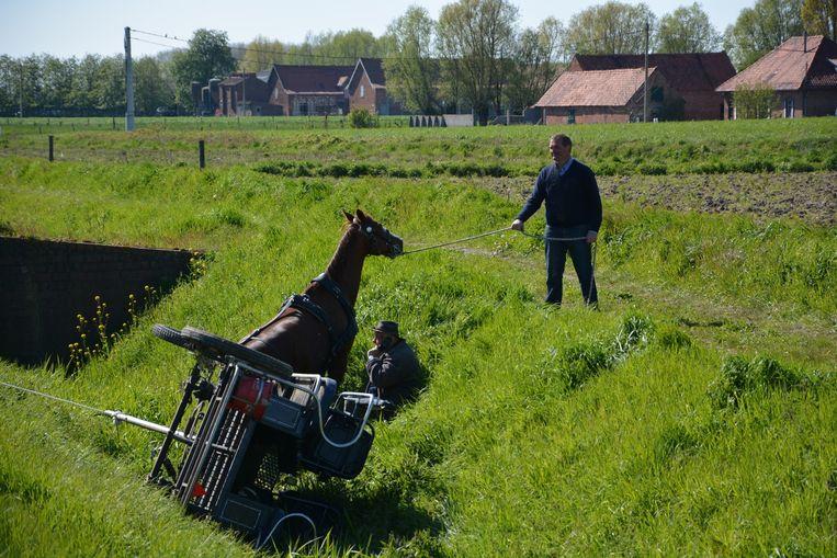 Een koetsier en zijn paarden sukkelden in de gracht langs de N58. Een van de paarden is hier al uit de gracht gered.
