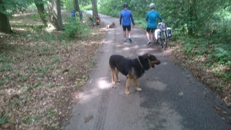 Twee honden veroorzaken overlast in het Kluisbos.