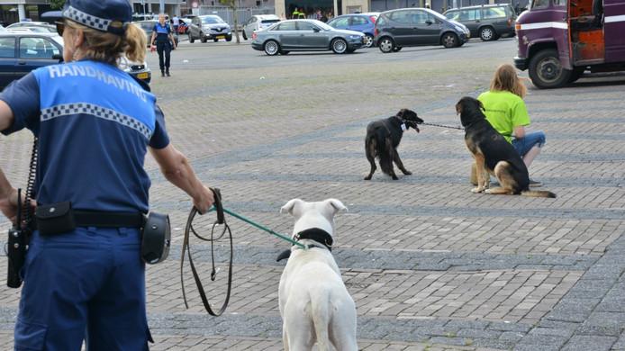 De honden krijgen na hun bevrijding volop de gelegenheid om in de frisse buitenlucht weer op adem te komen.