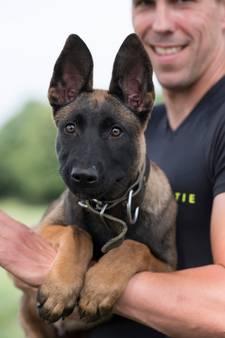 Bouke wordt politiehond (en wij gaan hem volgen)