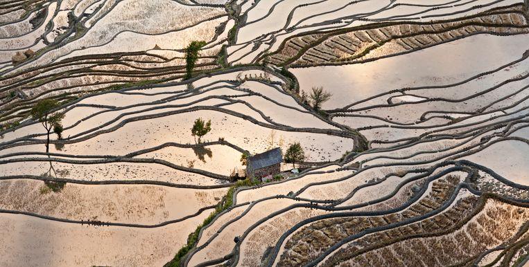 Rijstterrassen bij Yuanyang in de Chinese provincie Yunnan bij zonsondergang in de herfst. Rijst is een eenjarig gewas en moet dus elk jaar opnieuw gezaaid worden.  Beeld Chris Stenger