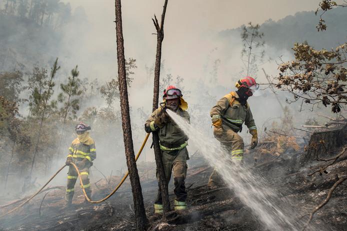 Brandweermannen bestrijden een bosbrand in het Noord-Spaanse Oursense, Galicië. Foto Brais Lorenzo