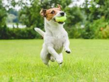 Rheden denkt na over afschaffen hondenbelasting