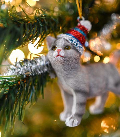 Staat jouw kerstboom nog? Maak er iets lekkers van voor je hem op straat zet