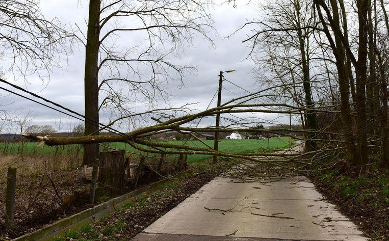 De Hazendries afgesloten wegens een omgevallen boom